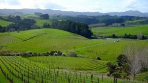 mahurangi river winery