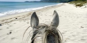 Horse-riding on Pakiri Beach