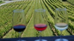mahurangi-river-wines